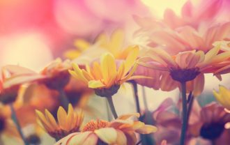 Vintage flowers for background