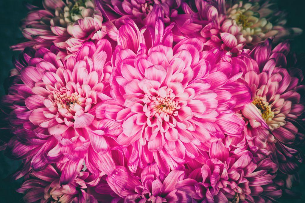 Vintage natural flower background