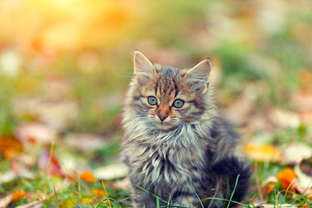 Portrait of little kitten on the grass with fallen leaves in autumn