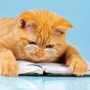 Cat with glasses lying on the datebook
