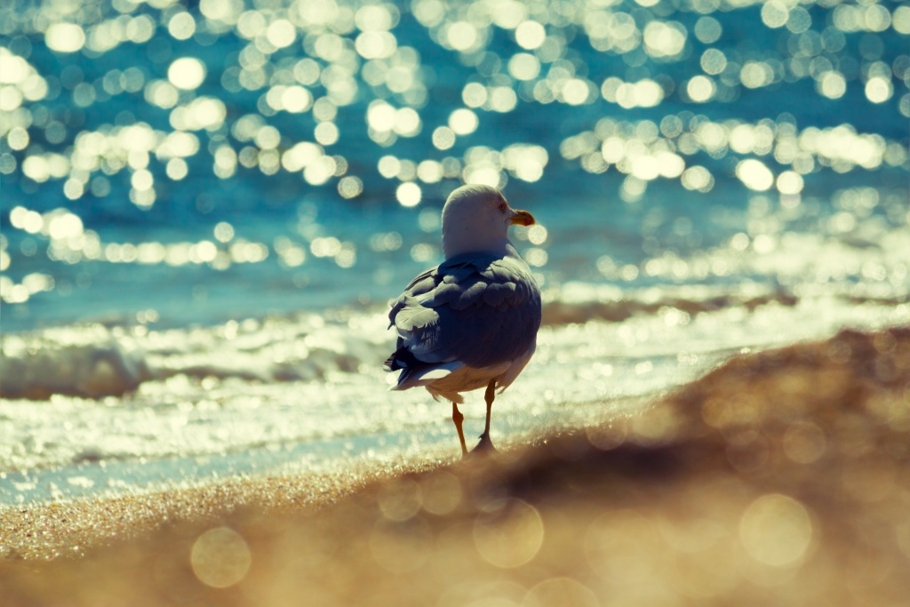Seagull walking on the beach on a sunny day