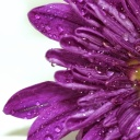 water-drops-on-flower-background_z1yIdyYd